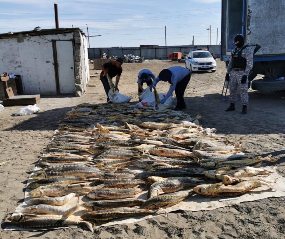 В Атырау полиция задержала браконьеров с 600 кг рыб осетровых пород