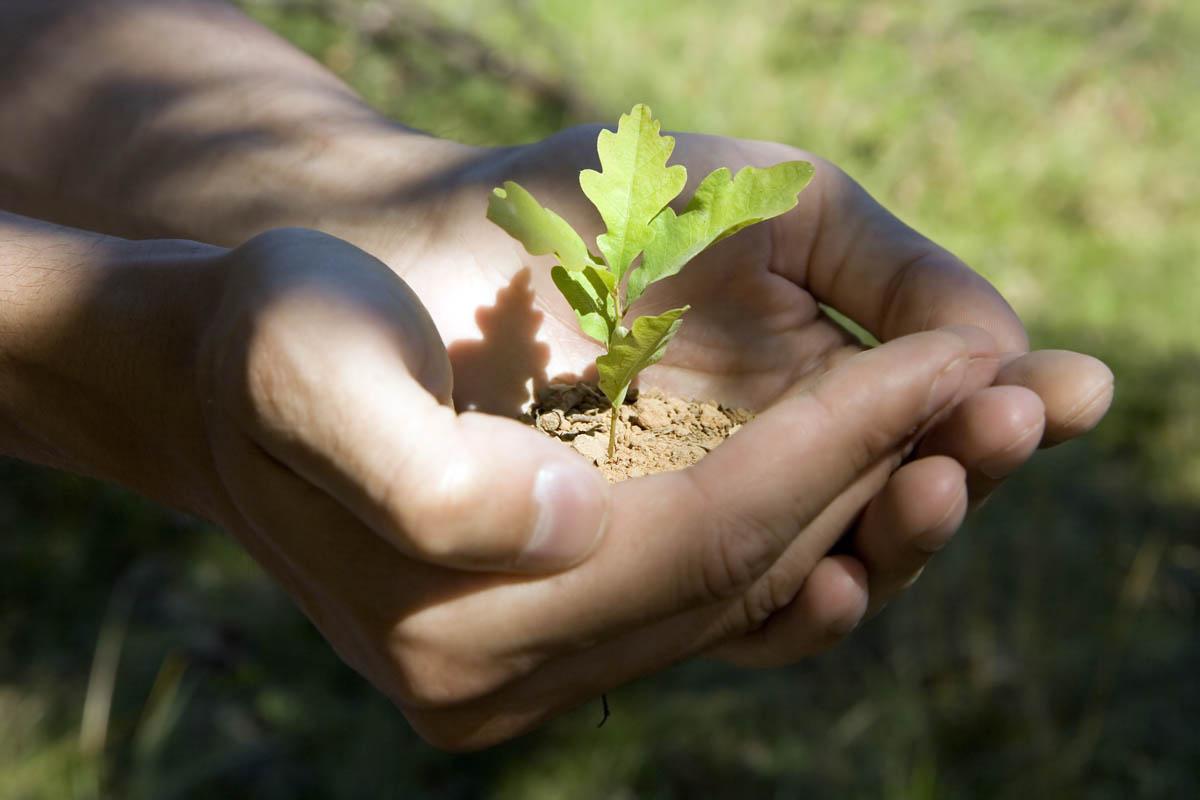 В Павлодарской области объявили акцию «Посади дуб»