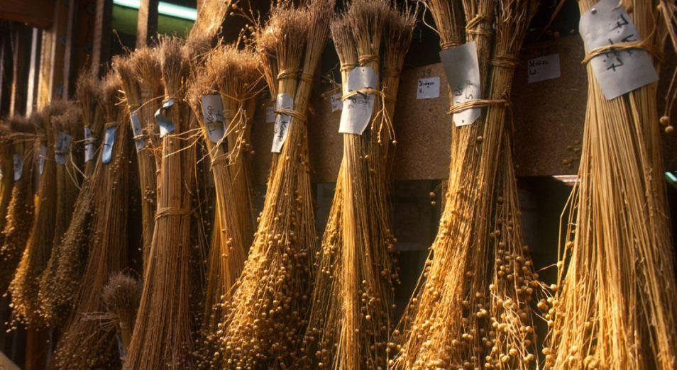 Казахстан стал крупнейшим в мире производителем льна