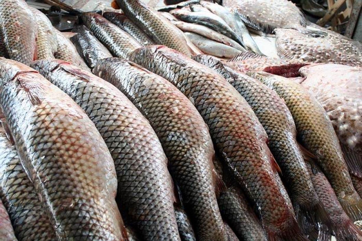 Рыбоводы страны нарастили объемы выпуска в 2,7 раза