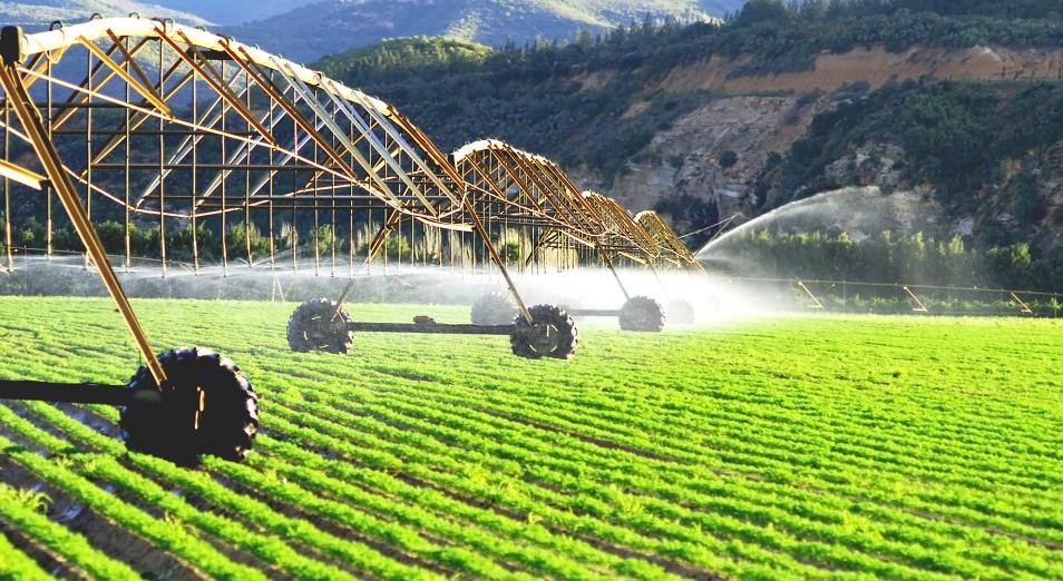 Цифры и факты: чем сельское хозяйство занято в пандемию