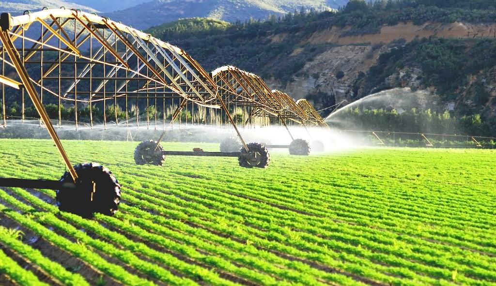 Сельское хозяйство в Казахстане становится инвестиционно привлекательным
