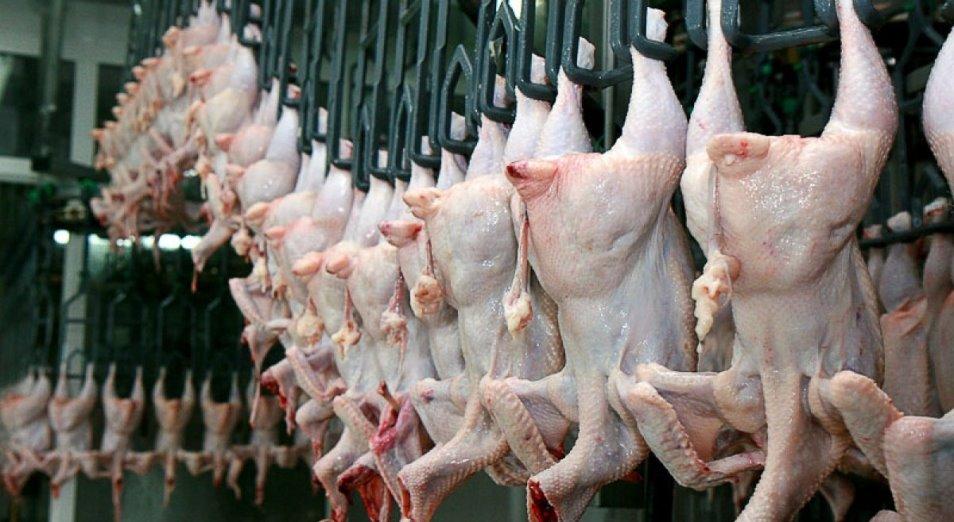 Производство птичьего мяса в Казахстане понемногу растет