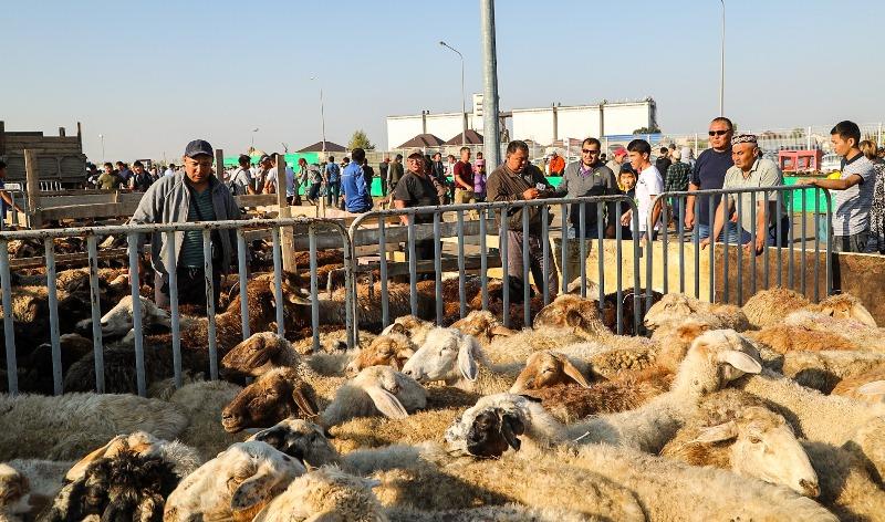 Законно скот к празднику в Алматы можно купить только в трёх местах