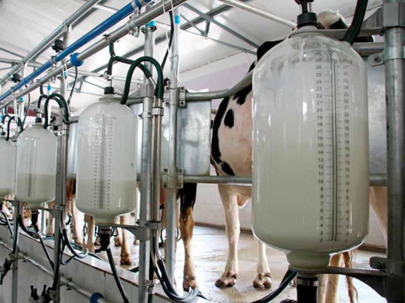 Молочники готовятся к вступлению нового техрегламента ТС