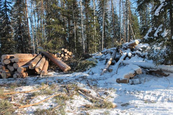 В СКО создали 92 рейдовые группы для защиты хвойных лесов от браконьеров