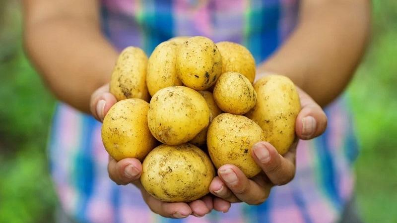 Мажилисмены просят выкупать урожай фермеров под будущие поставки