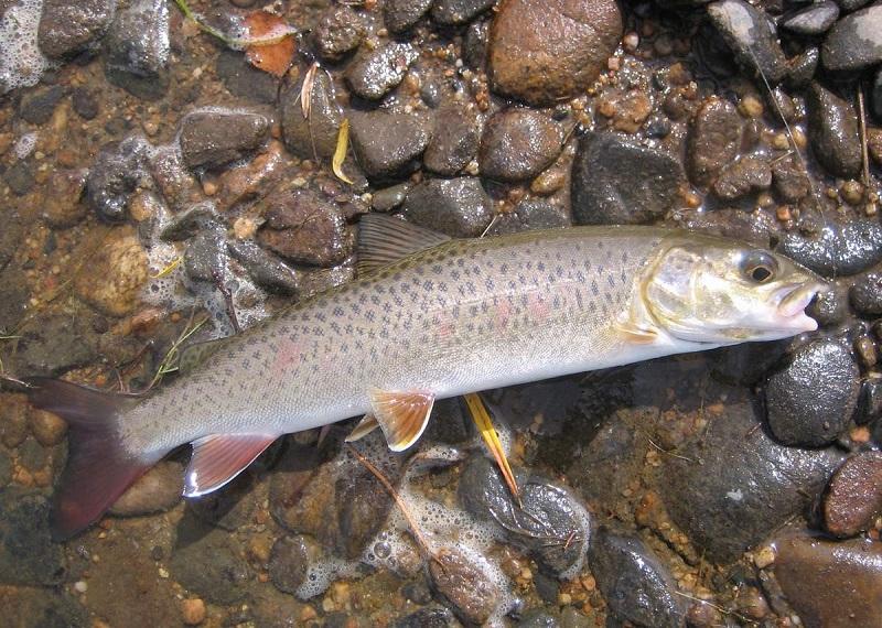 Работники заповедника в ВКО подозреваются в незаконном вылове рыбы