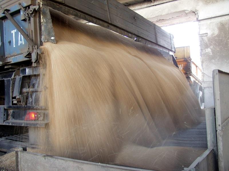 На хранение уже поступило 1,3 млн тонн зерна