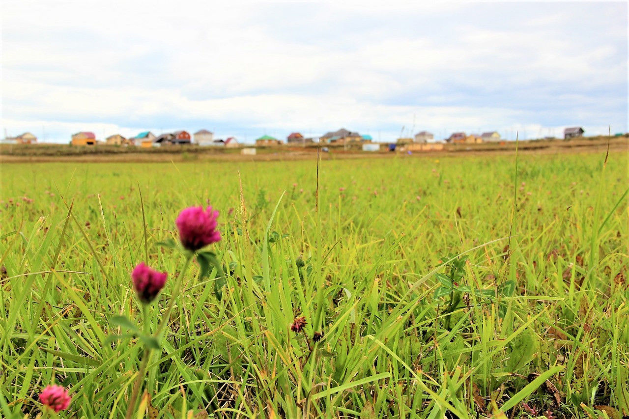 Фермерам в Алматинской области продают несуществующие земельные участки
