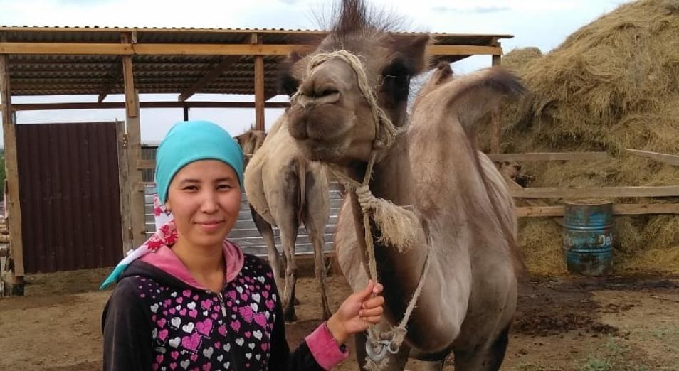11 тысяч проектов МСБ заработали в Казахстане