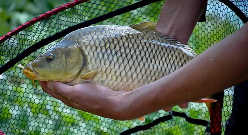 Более 1,5 млн тенге штрафов выписали в Павлодарской области за незаконную рыбалку