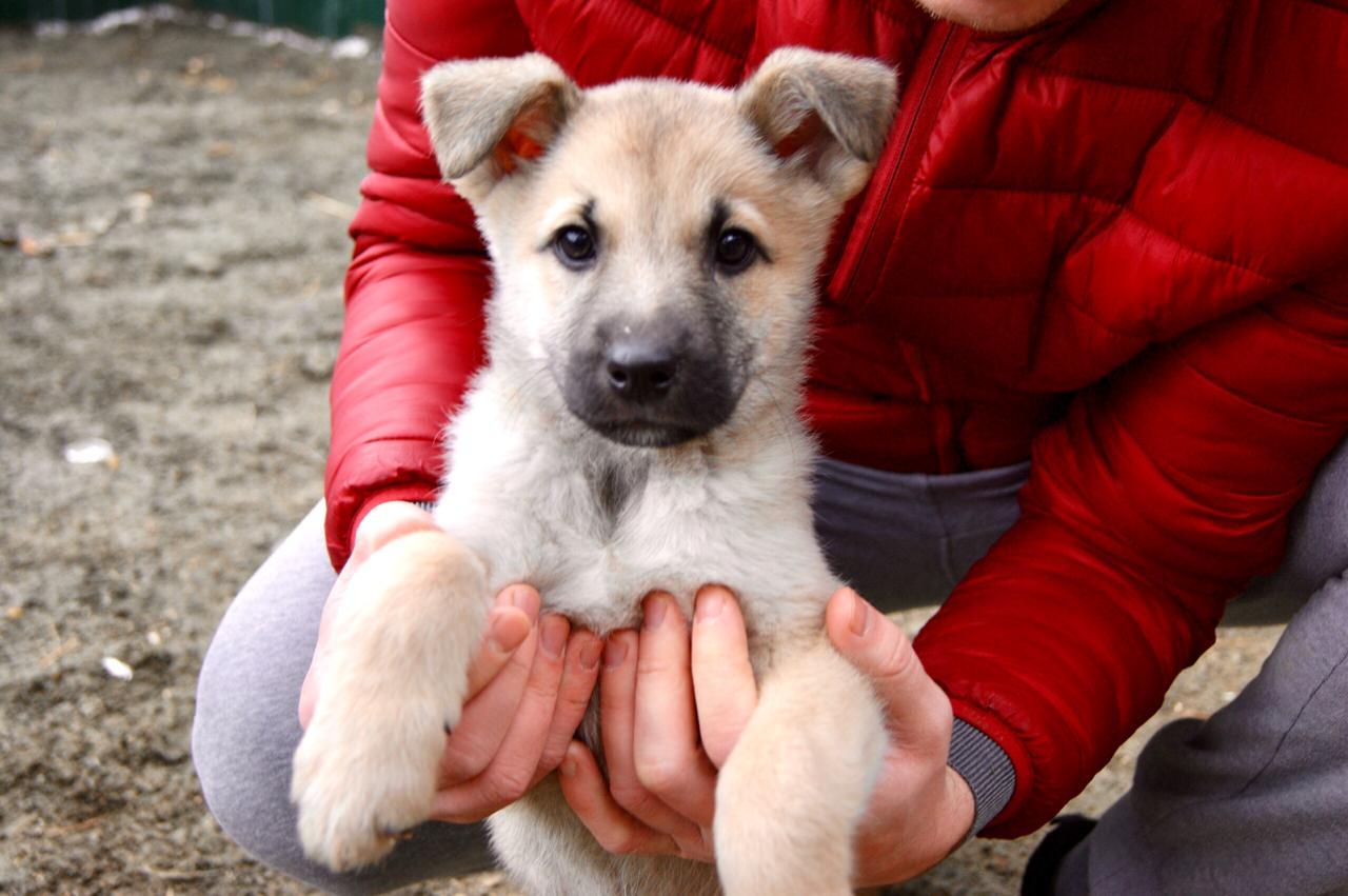 В Алматы вопросы экологии и защиты прав животных получают активные отзывы
