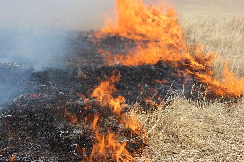 Вторые сутки тушат степной пожар площадью 3500 га в Карагандинской области