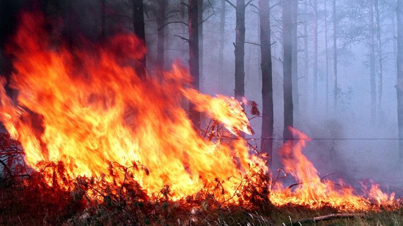 В Чернобыльской зоне вспыхнул пожар