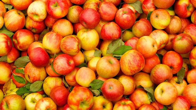 Садоводы Алматинской области намерены увеличить урожайность яблок