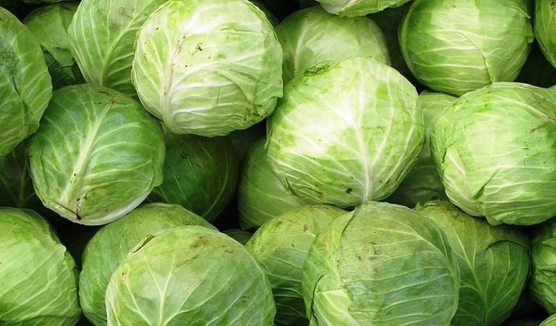 Фермеры Туркестанской области готовы экспортировать в Россию 250 тысяч тонн капусты