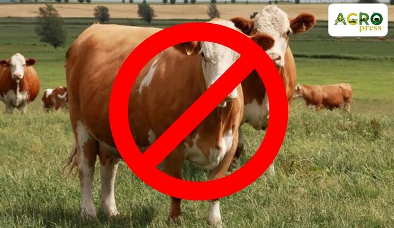 Минсельхоз РК закрыл экспорт живого скота
