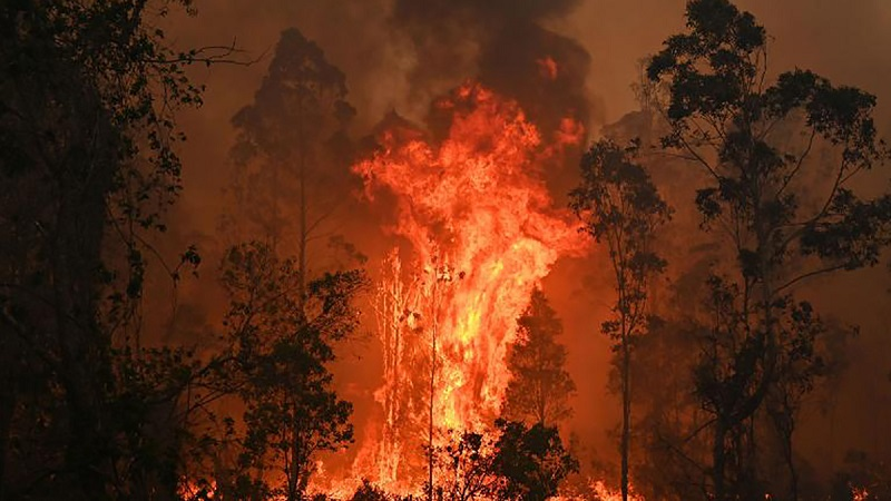 Лесные пожары в Австралии затронули две трети жителей страны