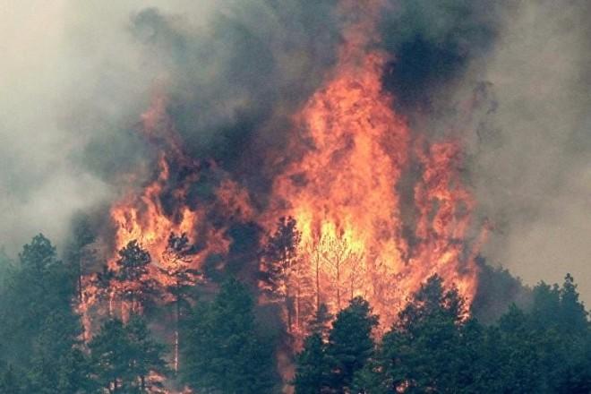 Почти 500 природных пожаров произошло в Казахстане за три недели