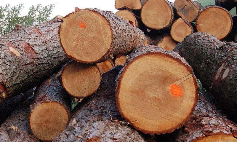 Селезащитная плотина на реке Хоргос будет построена из древесины Жаркентского лесного хозяйства