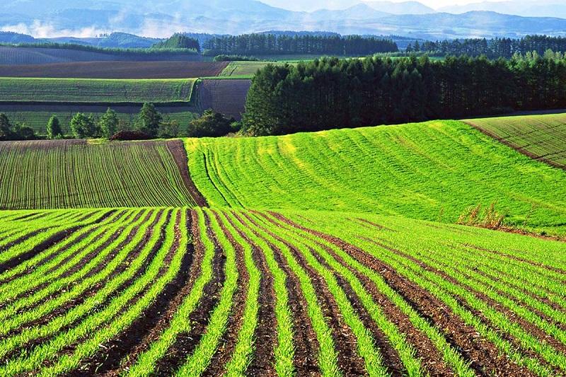 700 гектар жер сот арқылы алынды