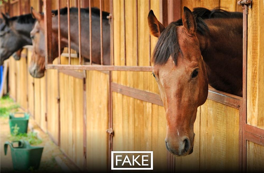 Сообщения о продаже мяса заболевших лошадей из Кыргызстана – фейк