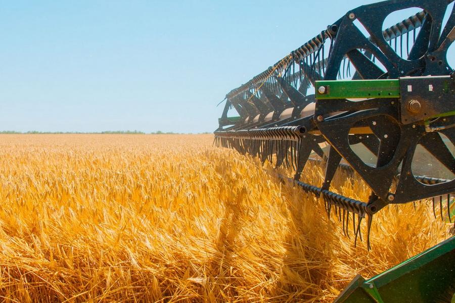 В Казахстане убрано 92,6% зерновых