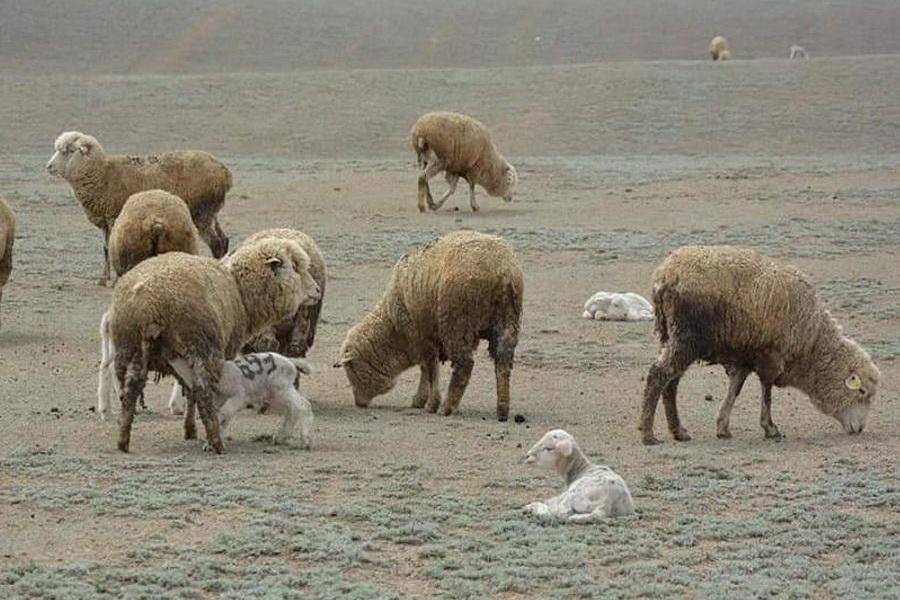 В Алматинской области приплод МРС превысил 1,5 млн голов