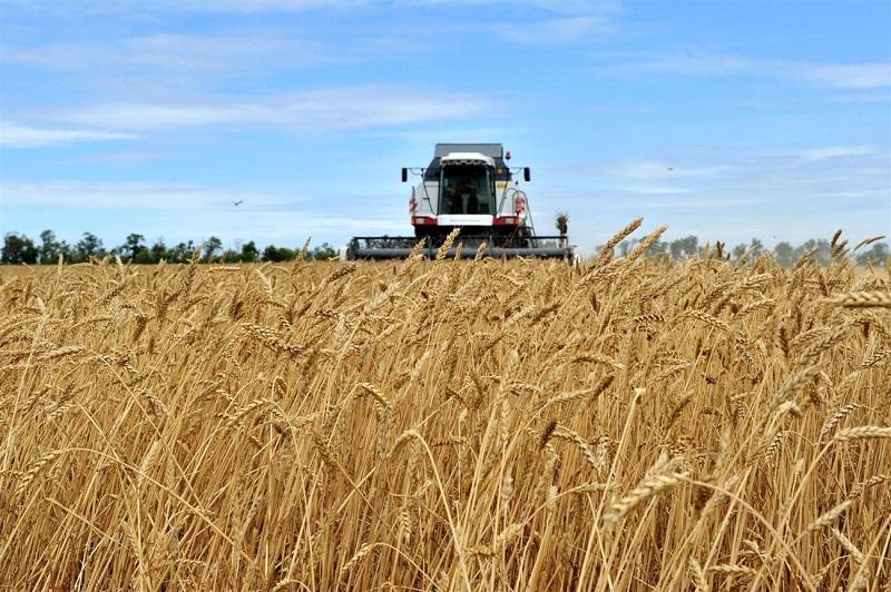 Посевная площадь зерновых в Казахстане увеличилась на 439 200 га