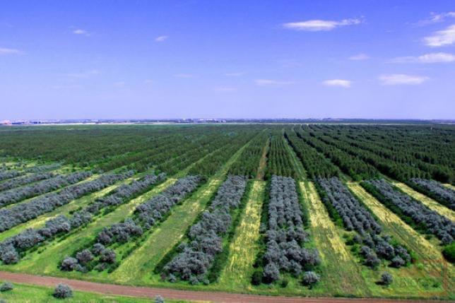 2 млрд түп ағаш қалай отырғызылады