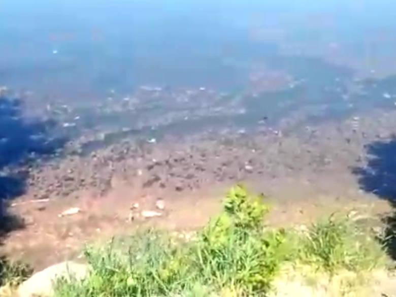 В Усть-Каменогорске мукомольное предприятие сбрасывало неочищенные стоки в водоем