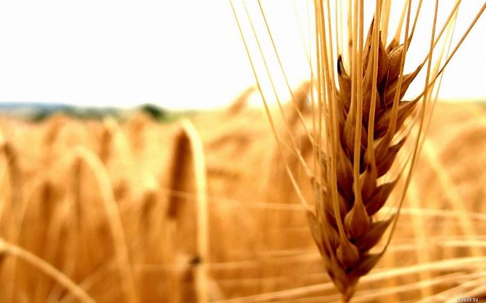 Зерновые расписки ушли в электронный формат