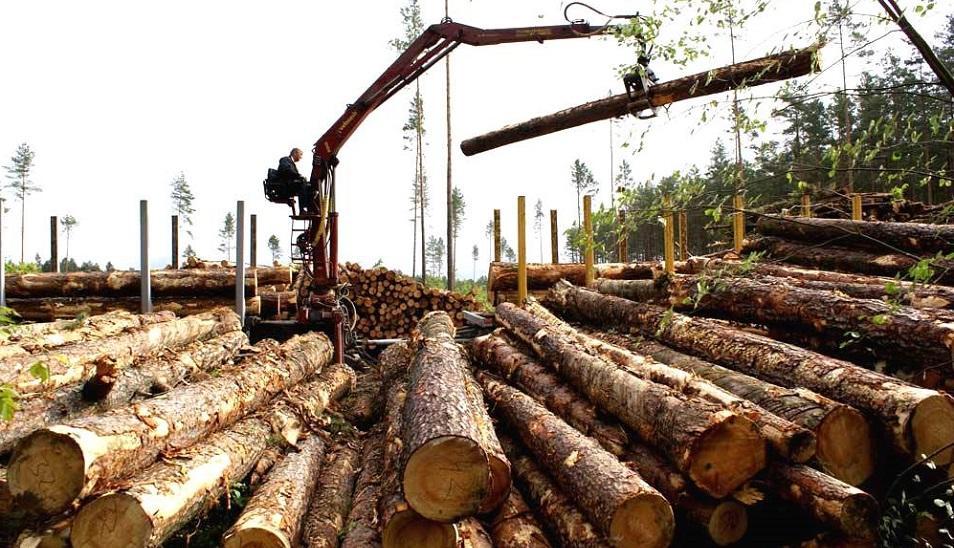 Санитаров хотят «вынести» из леса
