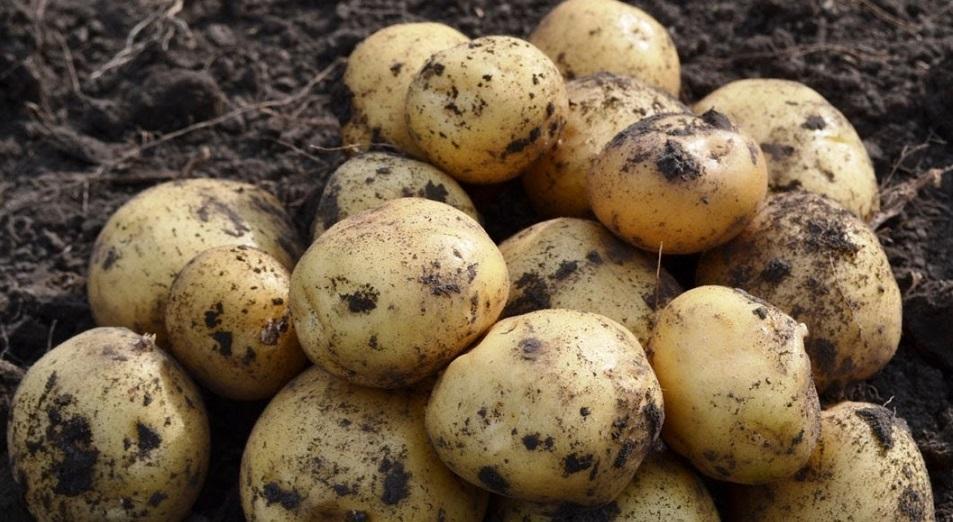 Павлодарский рецепт для кыргызской картошки