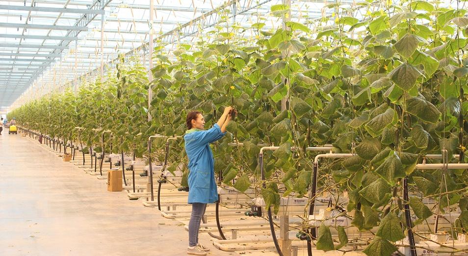 Алматы потеснит Китай на собственном рынке овощей