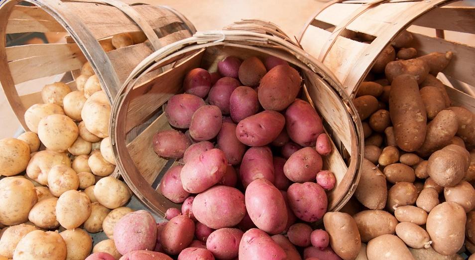 Почти на миллиард тенге привезли продовольствия из Акмолинской области в Астану
