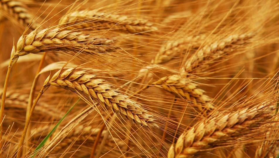 Работать с зерновыми расписками станет вдвое дешевле