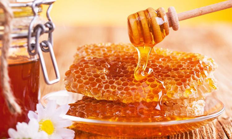 Китай распробовал урджарский мед