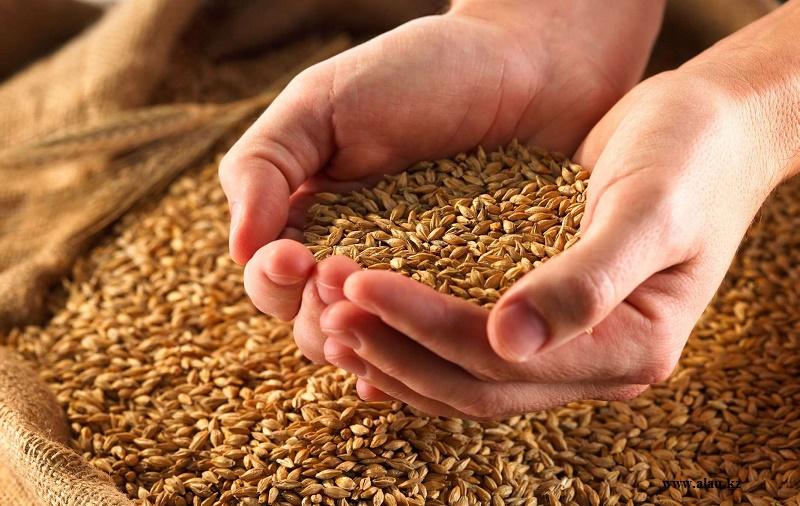 Более чем вдвое увеличили урожайность зерновых аграрии Алматинской области