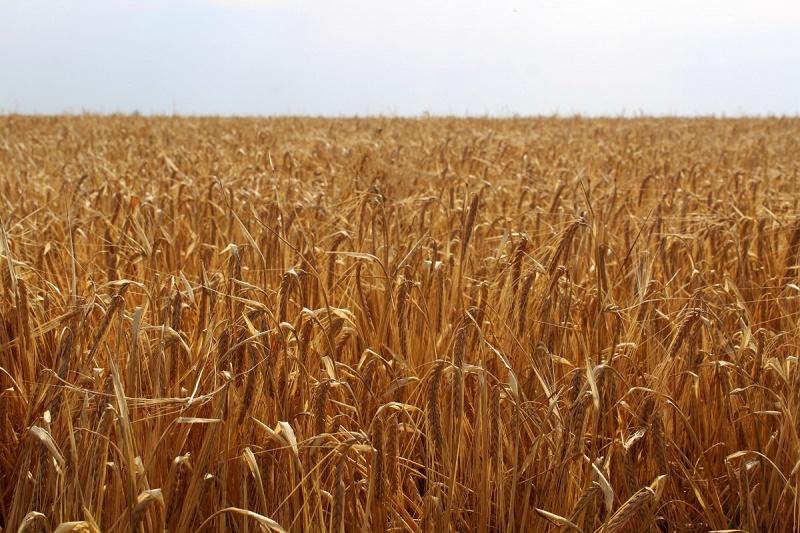 Еще 12 казахстанских предприятий включены в Реестр для экспорта сельхозпродукции в Китай