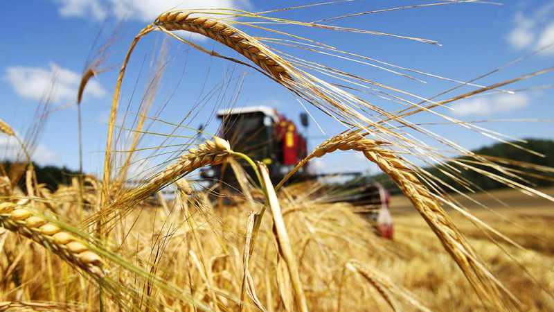 Хороший урожай зерна ожидают получить в Акмолинской области