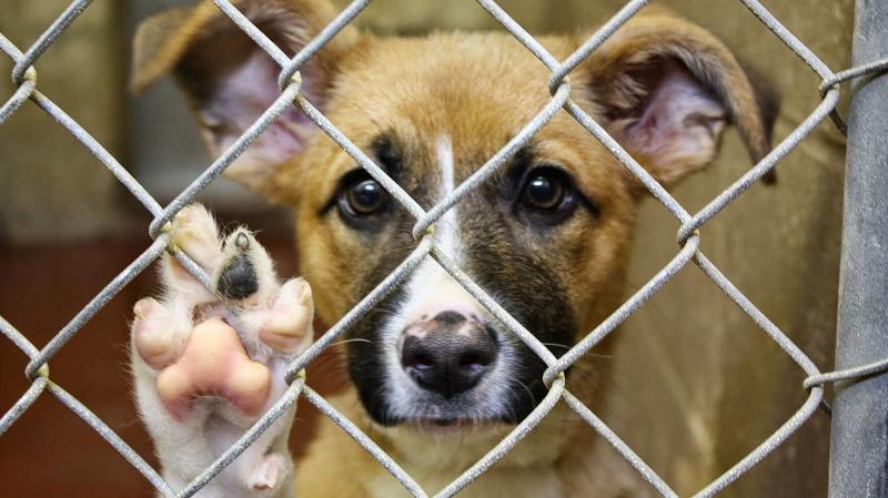В Шымкенте гаражная распродажа помогла приюту животных