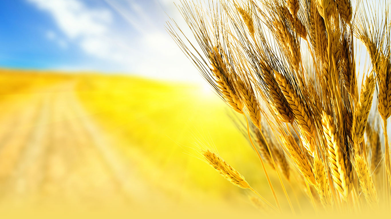 Американская пшеничная ассоциация прекратит работу в России