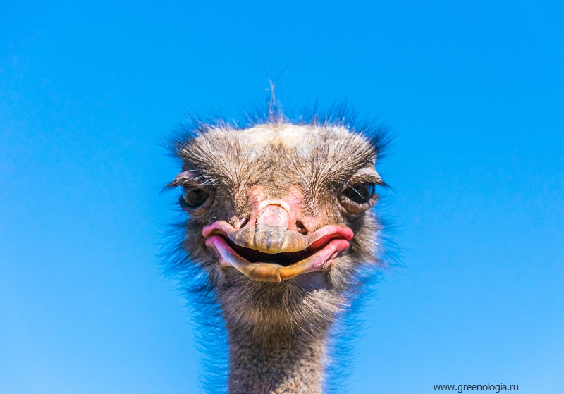 Самый старый обитатель карагандинского зоопарка – страус