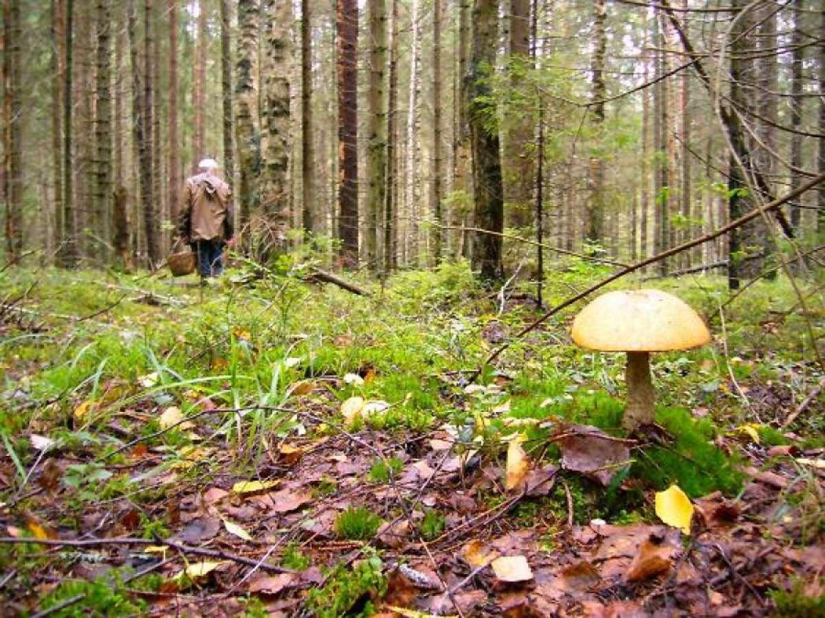 В горах Карагандинской области спасли заблудившихся грибников