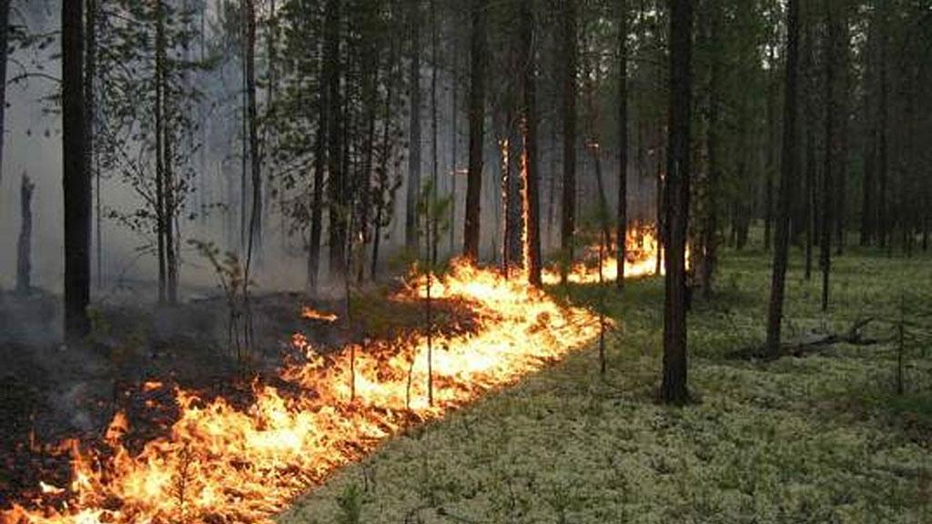 В Боровом на склоне горы Жеке батыр загорелся лес