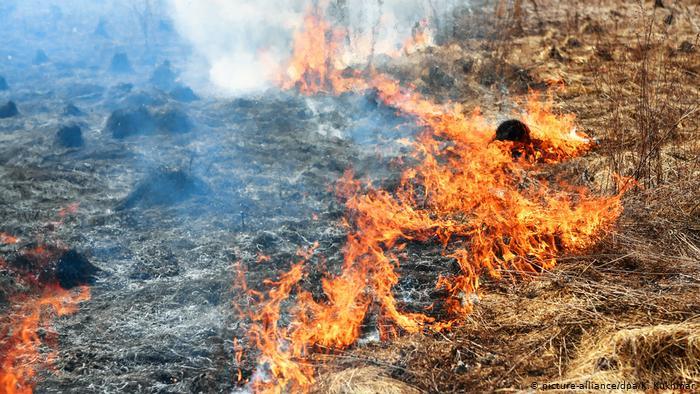 Более суток тушили возгорание сухостоя в ВКО