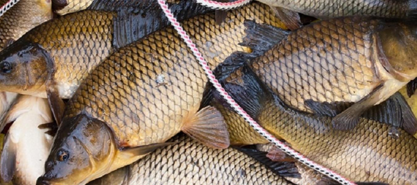 В этом году рыбхозяйствам компенсируют 30% затраченных на корм средств