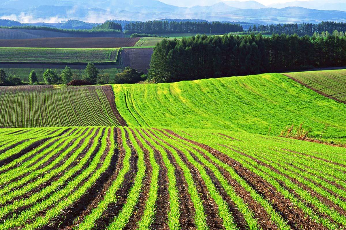 Более миллиона гектаров неиспользуемых земель изъяли через суд в СКО